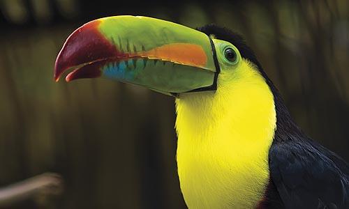COSTA RICA à partir de 1990 € TTC