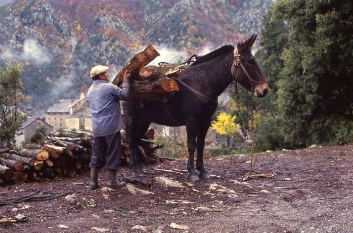 Les ruelles des vieux villages Corses.
