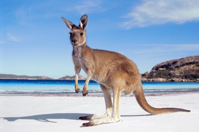 Odyssée Australienne + Melbourne et Palm Cove