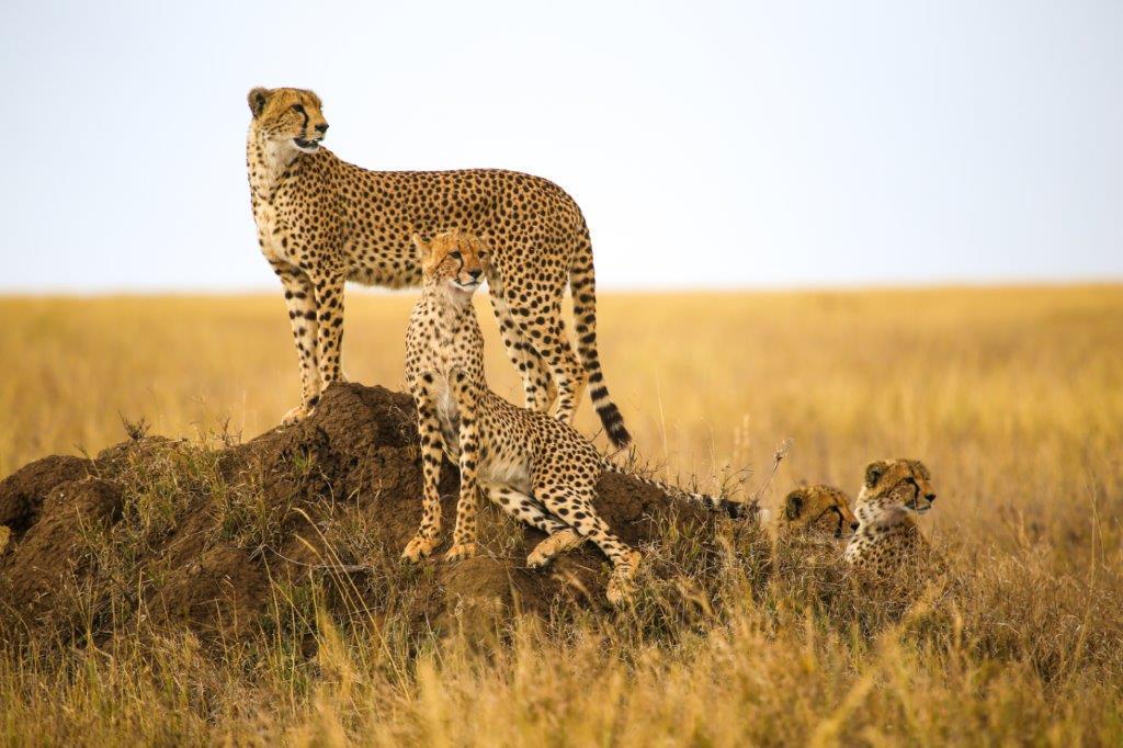 Safaris en 4x4 dans les parcs nationaux
