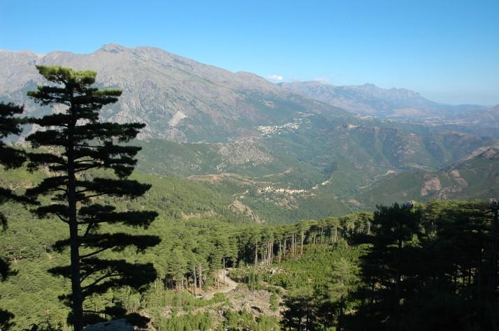 Le centre de l'île, entre les plus hauts sommets, propose de vaste fôrets de pins Lariccio