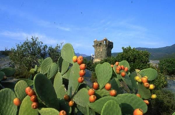 La célèbre tour de Nonza dans le Cap Corse.